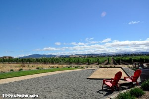 A view of the vineyard at Enriquez Estate Wines