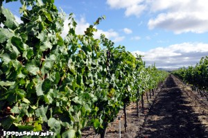 Vineyard at Enriquez Estate Wines